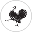 BOREAL無穀物全犬乾糧 - 火雞鮮肉 TURKEY 25lbs l 貓星人基地MeowZone